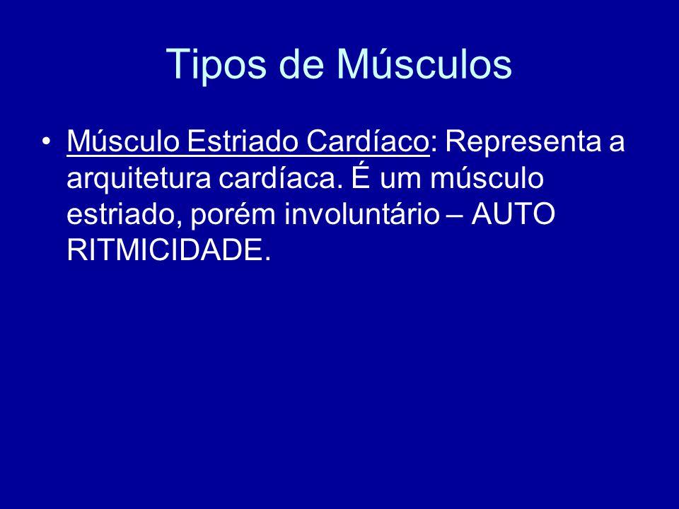Tipos de Músculos Músculo Estriado Cardíaco: Representa a arquitetura cardíaca. É um músculo estriado, porém involuntário – AUTO RITMICIDADE.