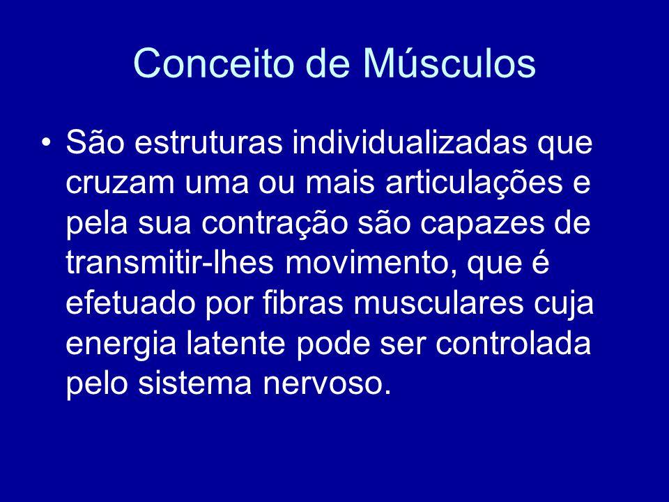 Conceito de Músculos São estruturas individualizadas que cruzam uma ou mais articulações e pela sua contração são capazes de transmitir-lhes movimento