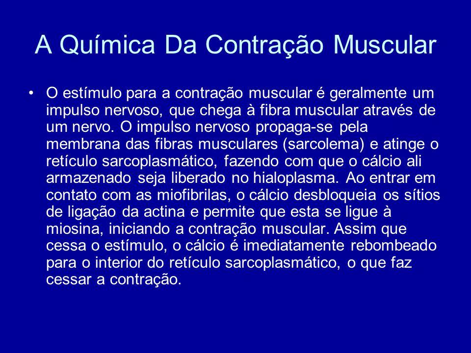 A Química Da Contração Muscular O estímulo para a contração muscular é geralmente um impulso nervoso, que chega à fibra muscular através de um nervo.