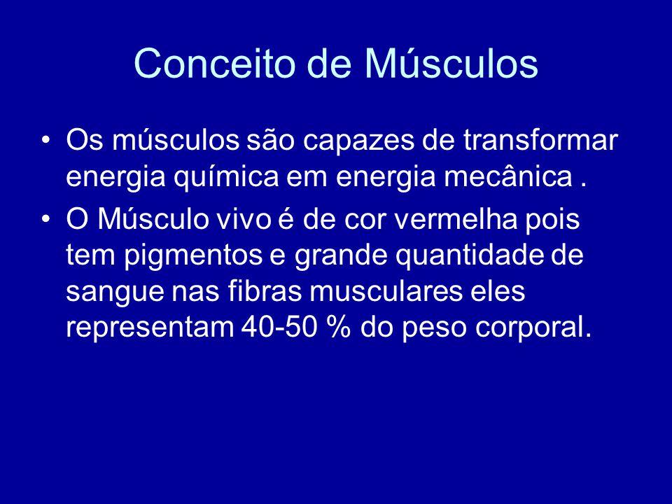 Conceito de Músculos Os músculos são capazes de transformar energia química em energia mecânica. O Músculo vivo é de cor vermelha pois tem pigmentos e
