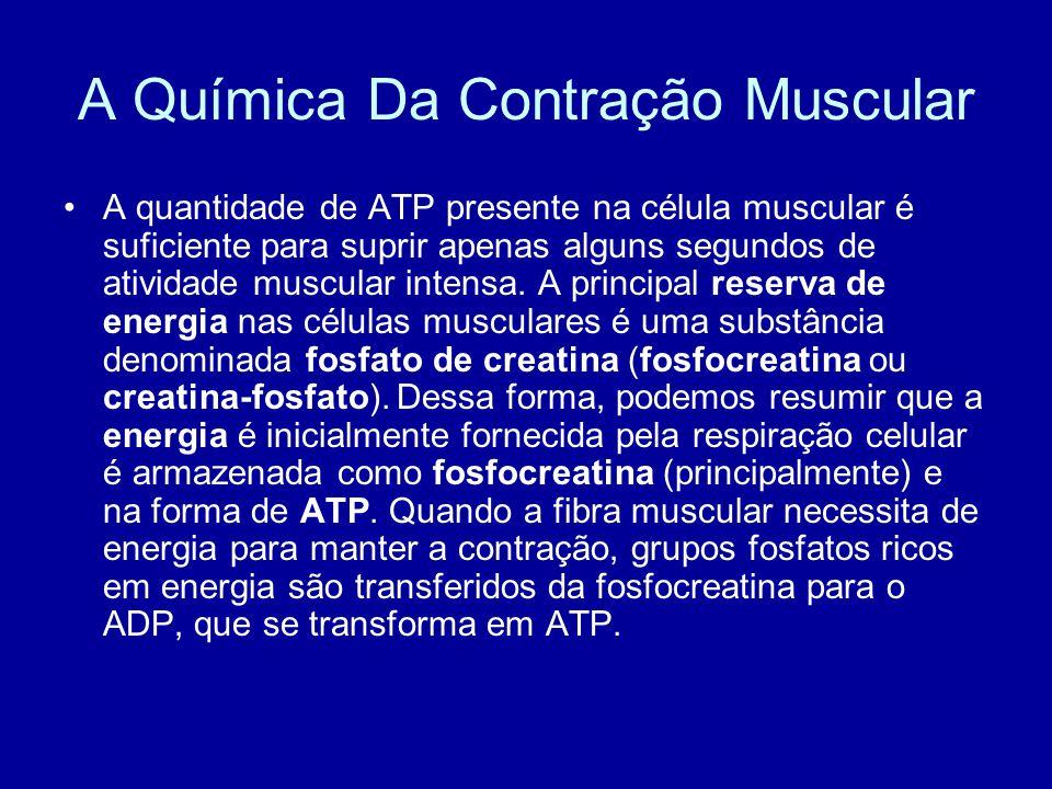 A Química Da Contração Muscular A quantidade de ATP presente na célula muscular é suficiente para suprir apenas alguns segundos de atividade muscular