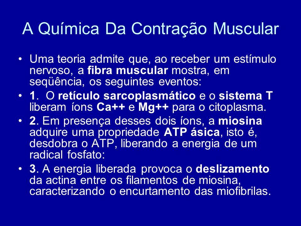 A Química Da Contração Muscular Uma teoria admite que, ao receber um estímulo nervoso, a fibra muscular mostra, em seqüência, os seguintes eventos: 1.