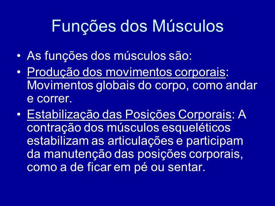 Funções dos Músculos As funções dos músculos são: Produção dos movimentos corporais: Movimentos globais do corpo, como andar e correr. Estabilização d