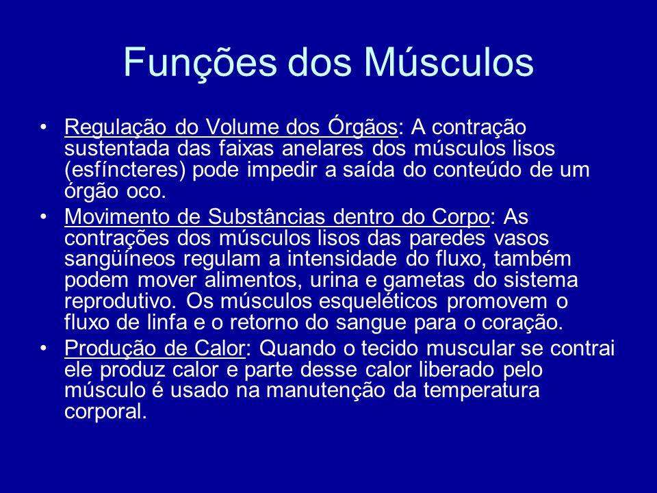 Funções dos Músculos Regulação do Volume dos Órgãos: A contração sustentada das faixas anelares dos músculos lisos (esfíncteres) pode impedir a saída