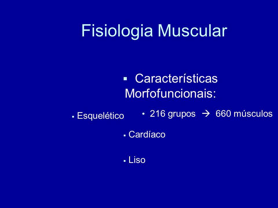 Fisiologia Muscular Características Morfofuncionais: Cardíaco Esquelético Liso 216 grupos 660 músculos