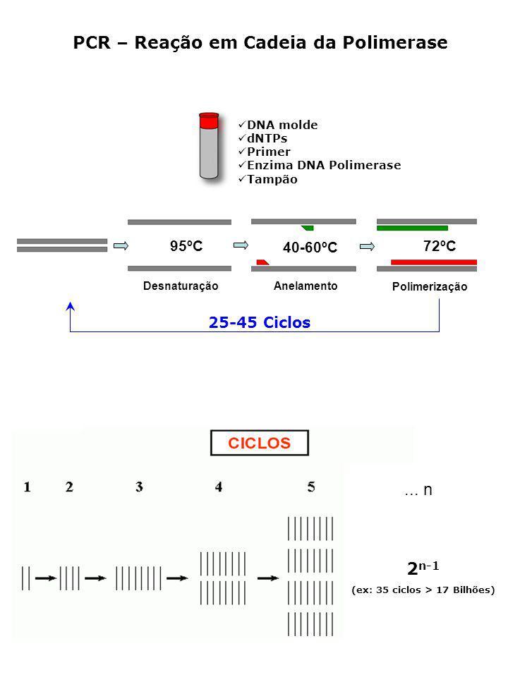 PCR – Reação em Cadeia da Polimerase... n 2 n-1 (ex: 35 ciclos > 17 Bilhões) DNA molde dNTPs Primer Enzima DNA Polimerase Tampão 25-45 Ciclos 95ºC 40-