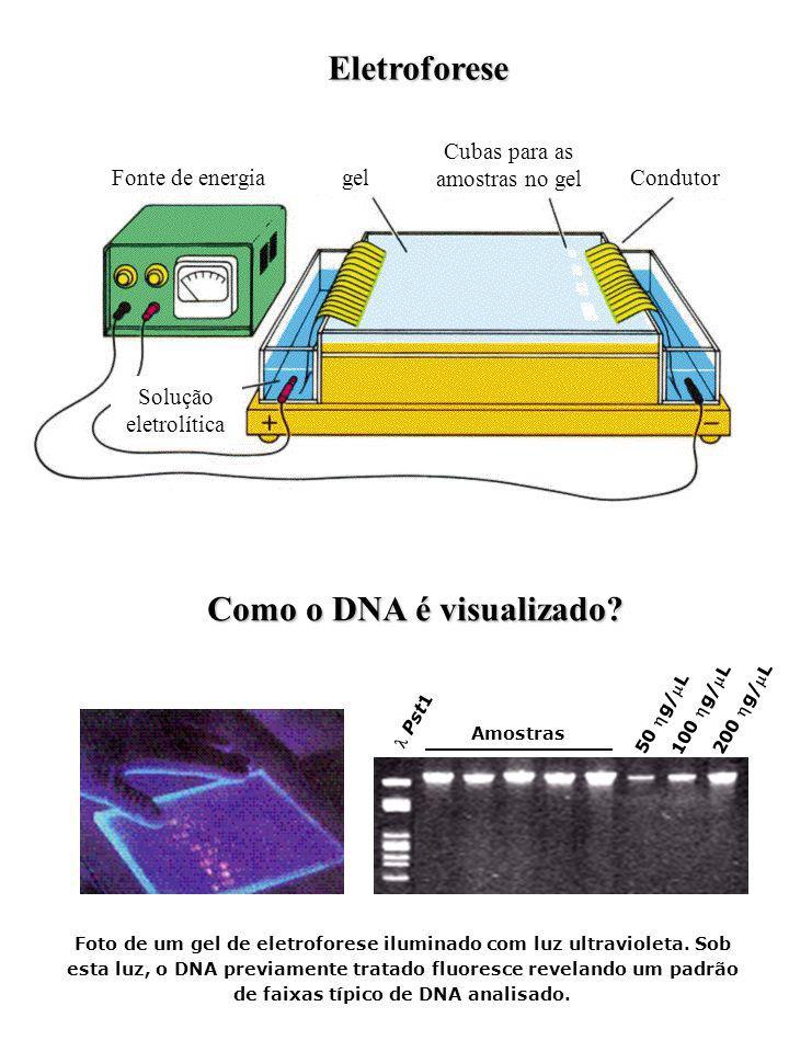 Solução eletrolítica Fonte de energiagel Cubas para as amostras no gel Condutor Eletroforese Como o DNA é visualizado? Foto de um gel de eletroforese