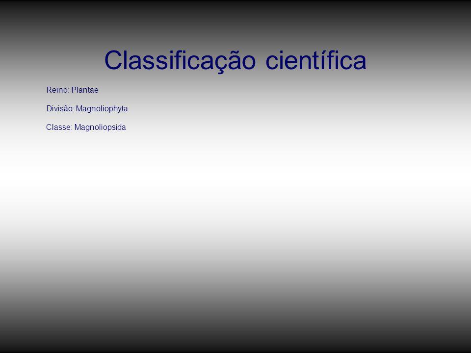 Classificação científica Reino: Plantae Divisão: Magnoliophyta Classe: Magnoliopsida