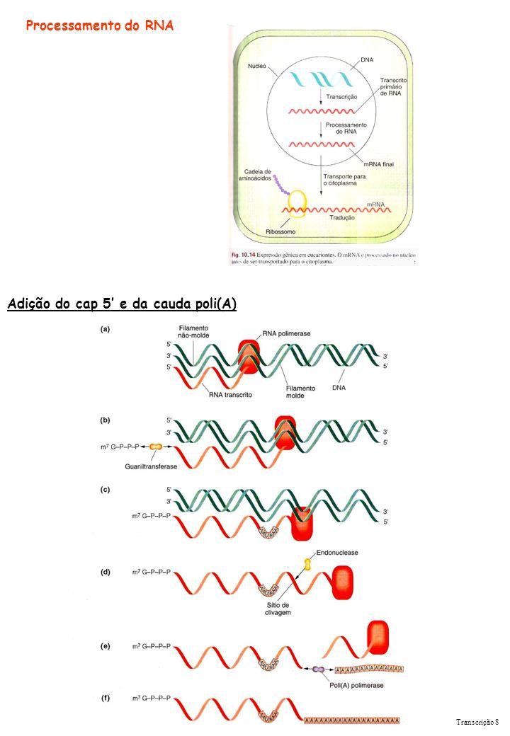 Transcrição 8 Adição do cap 5 e da cauda poli(A) Processamento do RNA