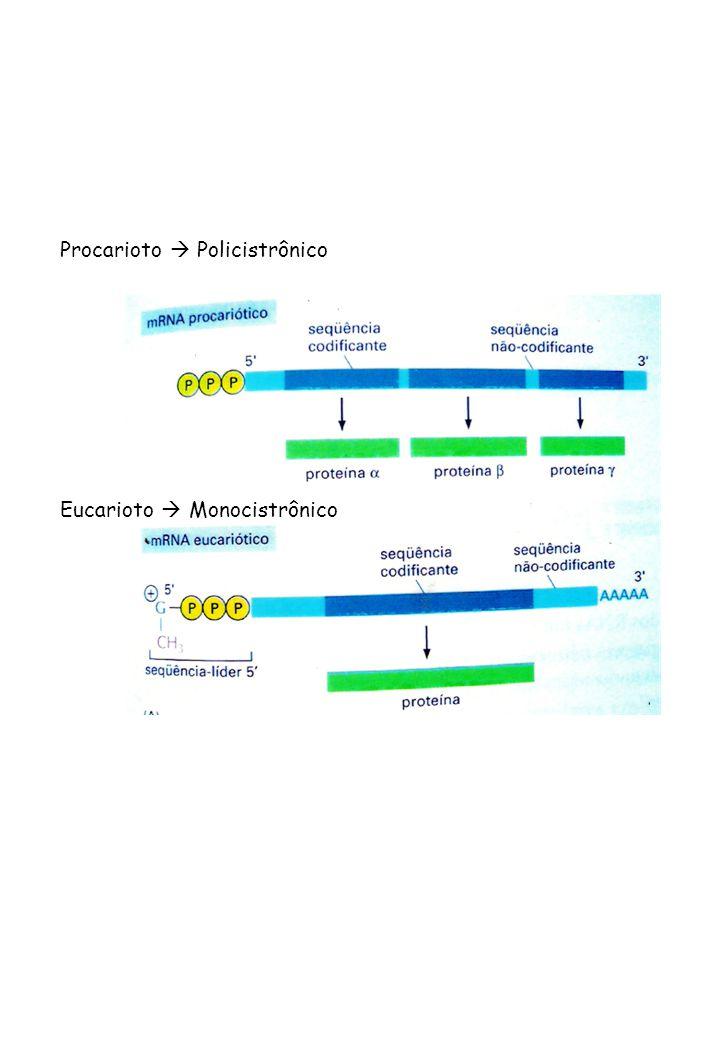 Procarioto Policistrônico Eucarioto Monocistrônico