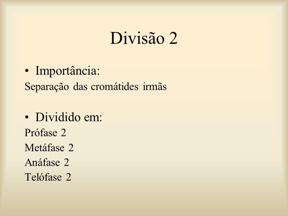 Divisão 2 Importância: Separação das cromátides irmãs Dividido em: Prófase 2 Metáfase 2 Anáfase 2 Telófase 2