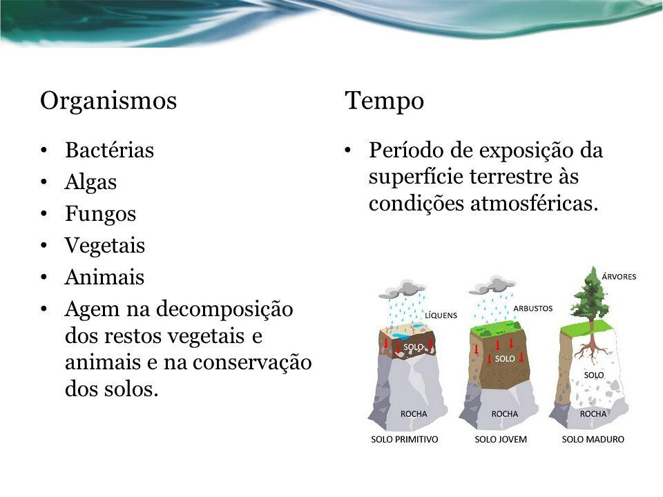 Organismos Tempo Bactérias Algas Fungos Vegetais Animais Agem na decomposição dos restos vegetais e animais e na conservação dos solos.