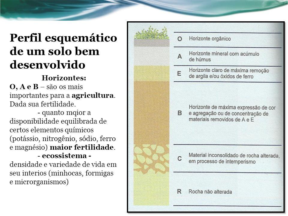 Perfil esquemático de um solo bem desenvolvido Horizontes: O, A e B – são os mais importantes para a agricultura.