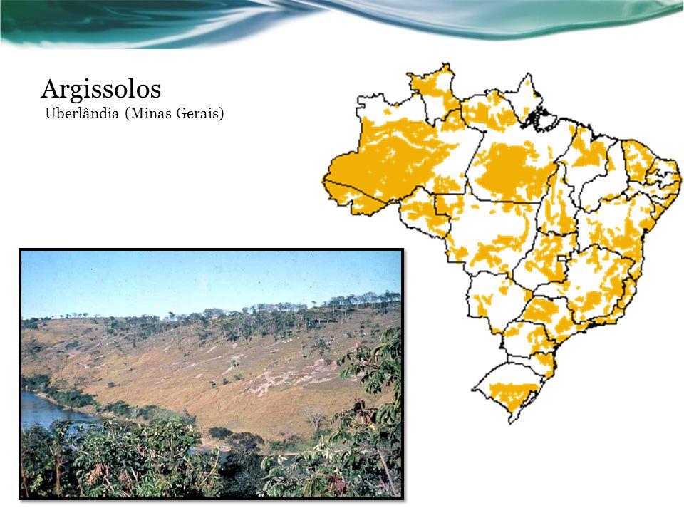 Argissolos Uberlândia (Minas Gerais)