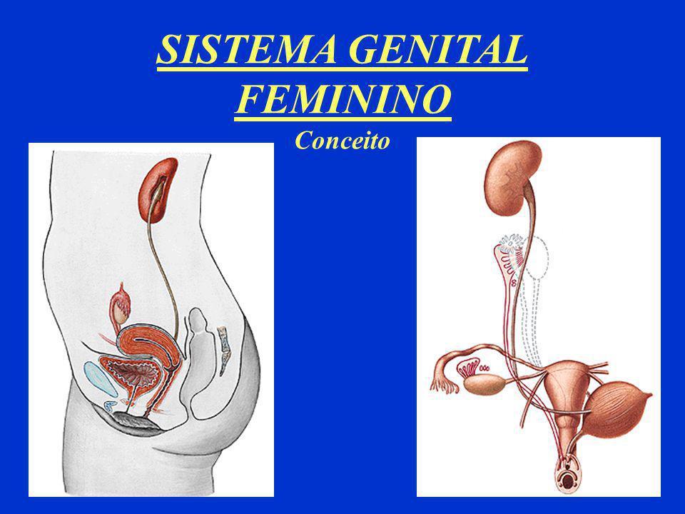SISTEMA GENITAL FEMININO Conceito