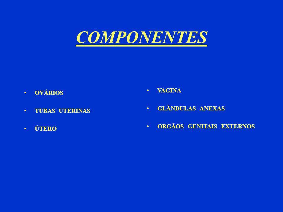 COMPONENTES OVÁRIOS TUBAS UTERINAS ÚTERO VAGINA GLÂNDULAS ANEXAS ORGÃOS GENITAIS EXTERNOS