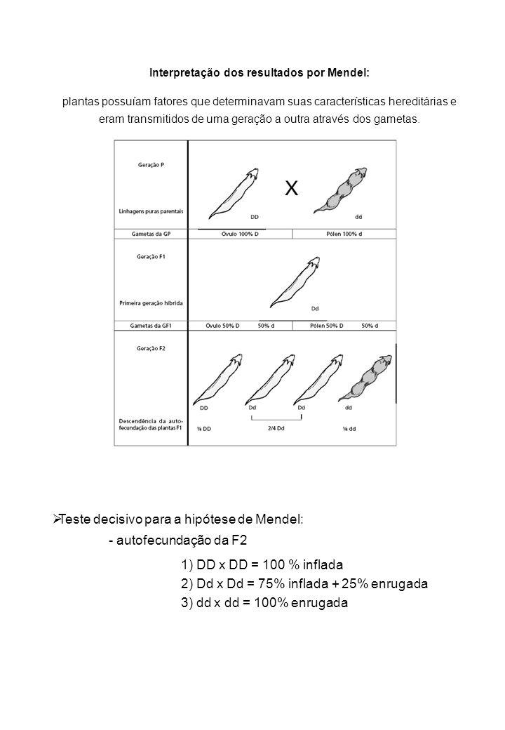 Interpretação dos resultados por Mendel: plantas possuíam fatores que determinavam suas características hereditárias e eram transmitidos de uma geração a outra através dos gametas.