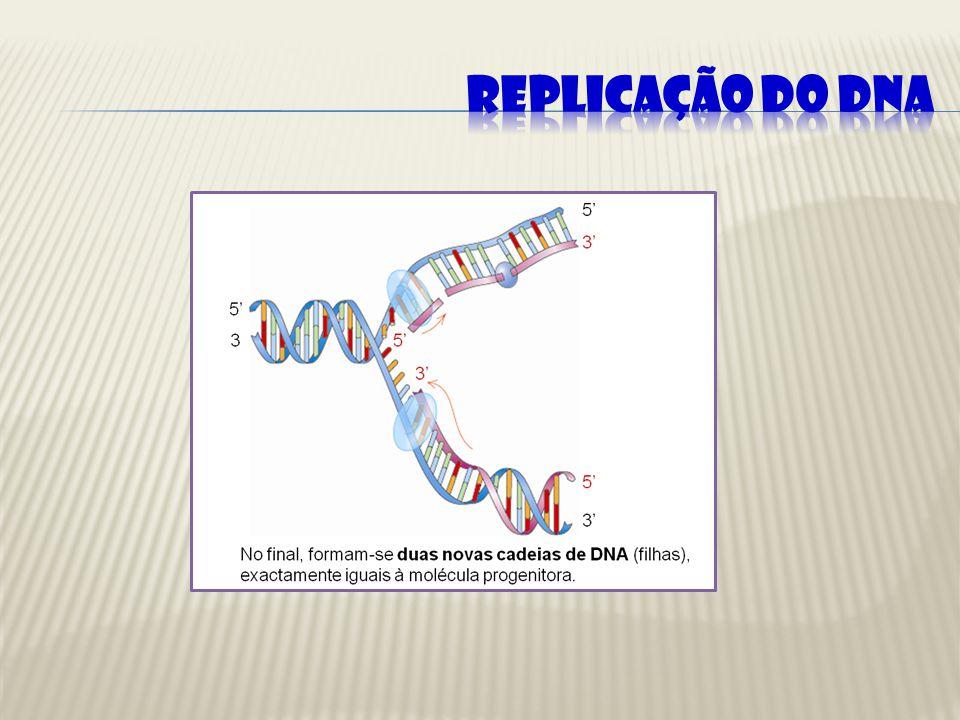 Síntese de DNA em Eucariotas: As Bolhas de Replicação Nos seres eucariotas, a replicação do DNA requer múltiplas origens, devido ao tamanho do seu genoma.