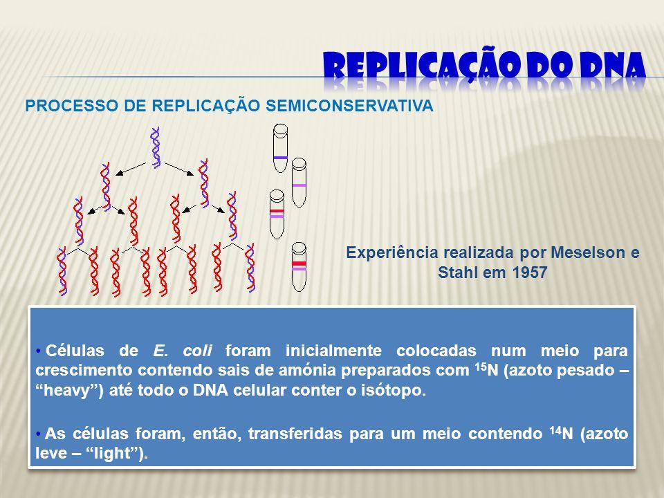 Durante a replicação do DNA as duas cadeias velhas ou mães servem de molde para cada cadeia nova ou filha complementar, que está a ser sintetizada.