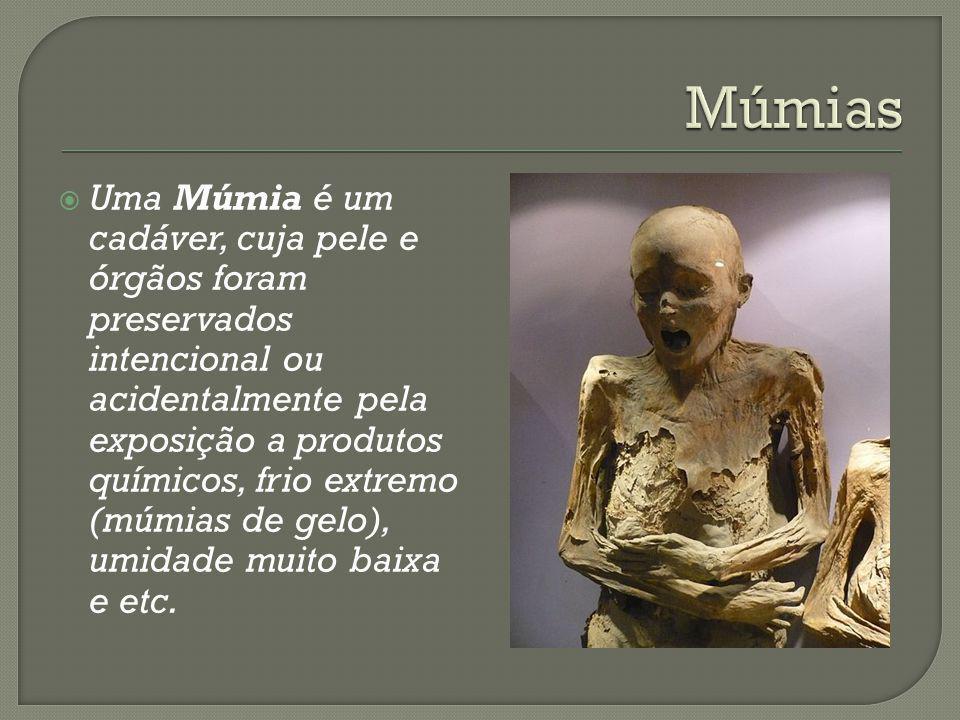 Uma Múmia é um cadáver, cuja pele e órgãos foram preservados intencional ou acidentalmente pela exposição a produtos químicos, frio extremo (múmias de