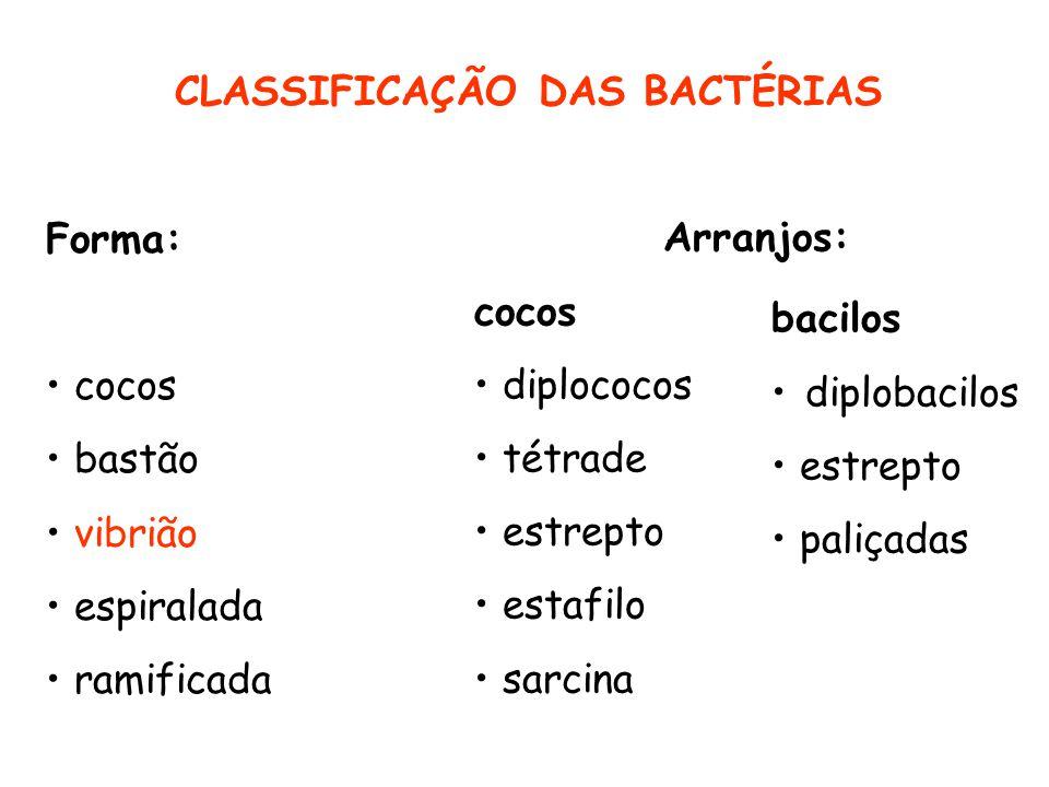 CLASSIFICAÇÃO DAS BACTÉRIAS Forma: cocos bastão vibrião espiralada ramificada Arranjos: cocos diplococos tétrade estrepto estafilo sarcina bacilos dip