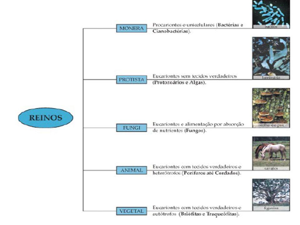 CLASSIFICAÇÃO DOS MICROORGANISMOS Vírus Bactérias Fungos