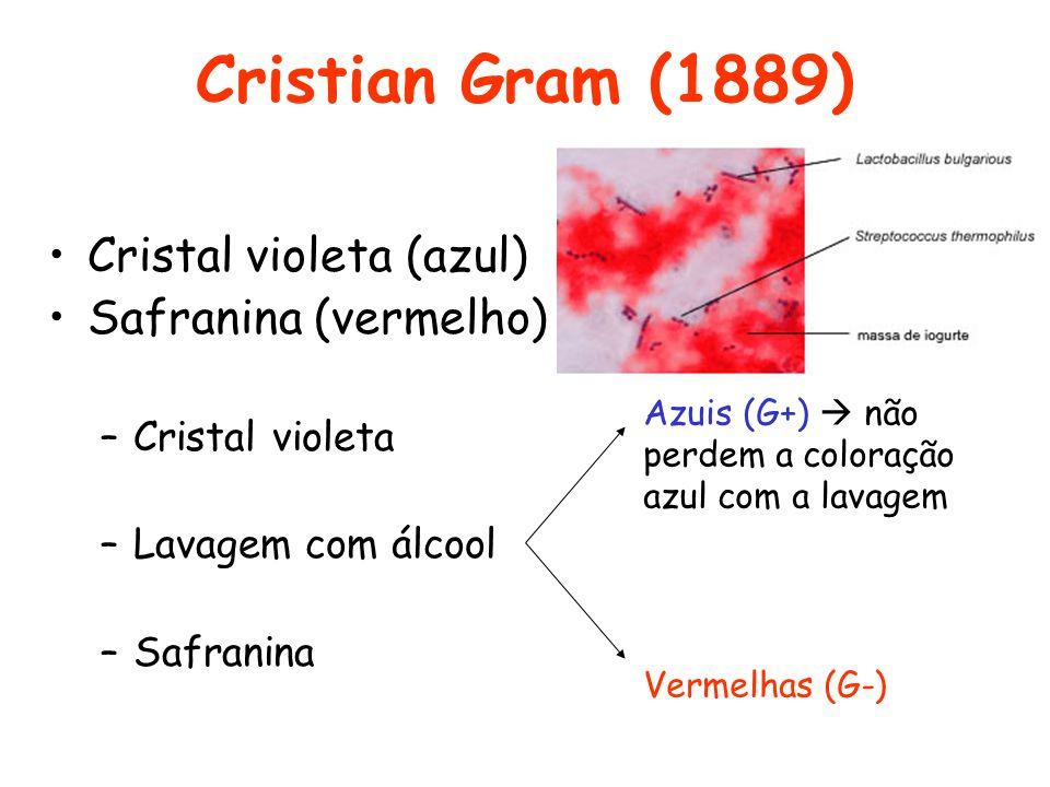 Cristian Gram (1889) Cristal violeta (azul) Safranina (vermelho) –Cristal violeta –Lavagem com álcool –Safranina Azuis (G+) não perdem a coloração azu