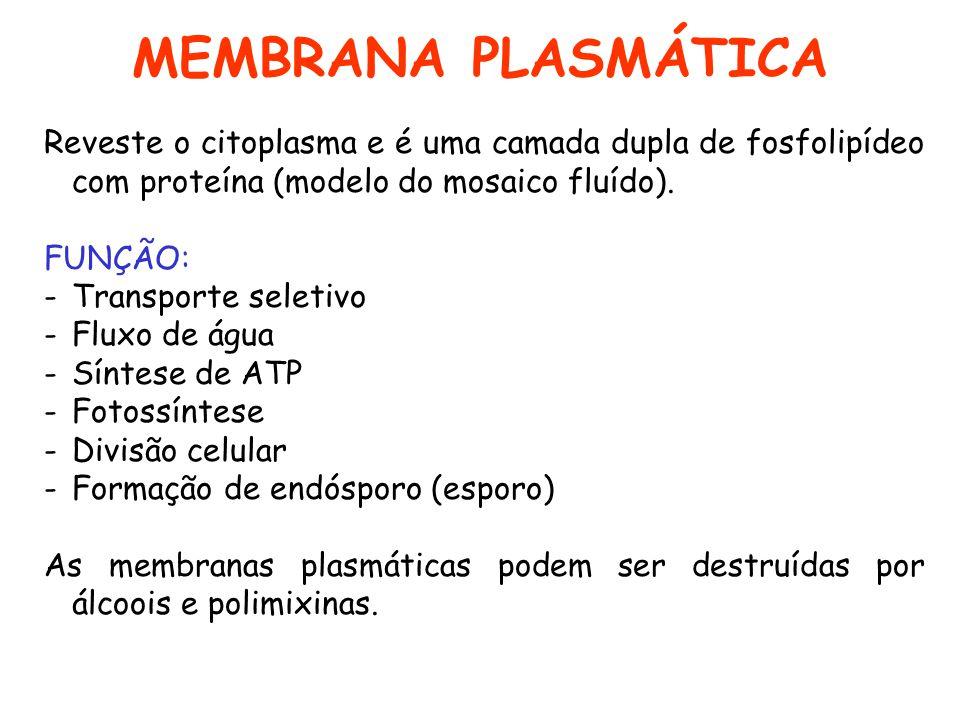 MEMBRANA PLASMÁTICA Reveste o citoplasma e é uma camada dupla de fosfolipídeo com proteína (modelo do mosaico fluído). FUNÇÃO: -Transporte seletivo -F
