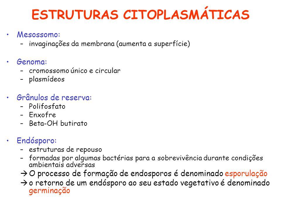 ESTRUTURAS CITOPLASMÁTICAS Mesossomo: –invaginações da membrana (aumenta a superfície) Genoma: –cromossomo único e circular –plasmídeos Grânulos de re