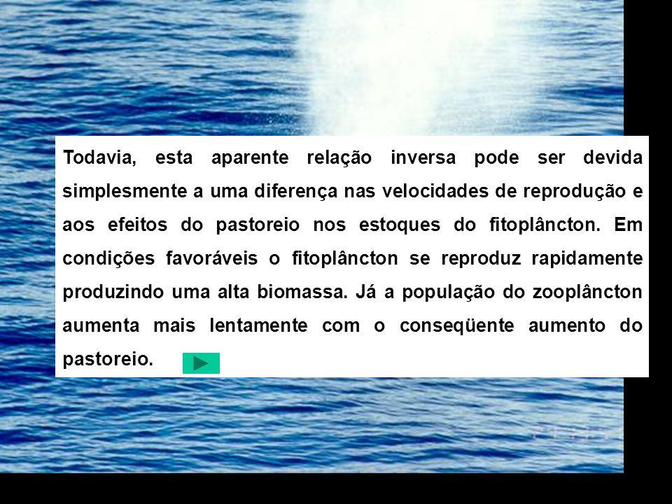 O BACTERIOPLÂNCTON A quantidade de bacterioplâncton no mar, geralmente, é máxima na superfície onde eles estão associados com a alta concentração de matéria orgânica existente.