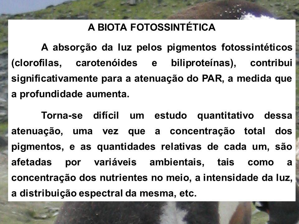 A BIOTA FOTOSSINTÉTICA A absorção da luz pelos pigmentos fotossintéticos (clorofilas, carotenóides e biliproteínas), contribui significativamente para