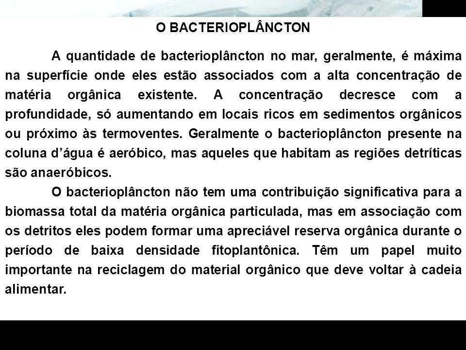 O BACTERIOPLÂNCTON A quantidade de bacterioplâncton no mar, geralmente, é máxima na superfície onde eles estão associados com a alta concentração de m