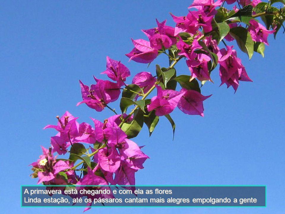 A primavera está chegando e com ela as flores Linda estação, até os pássaros cantam mais alegres empolgando a gente