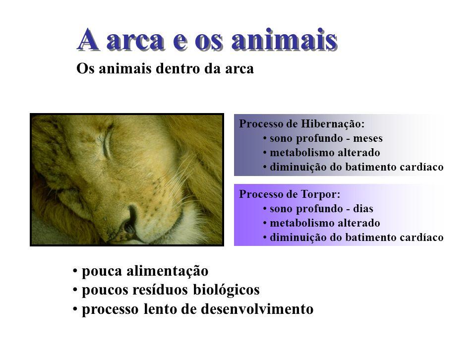 A arca e os animais Os animais dentro da arca Processo de Hibernação: sono profundo - meses metabolismo alterado diminuição do batimento cardíaco Proc