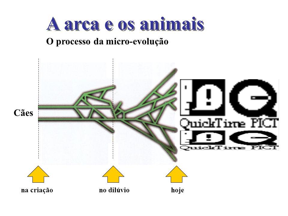 A arca e os animais O processo da micro-evolução Cães na criaçãono dilúvio hoje