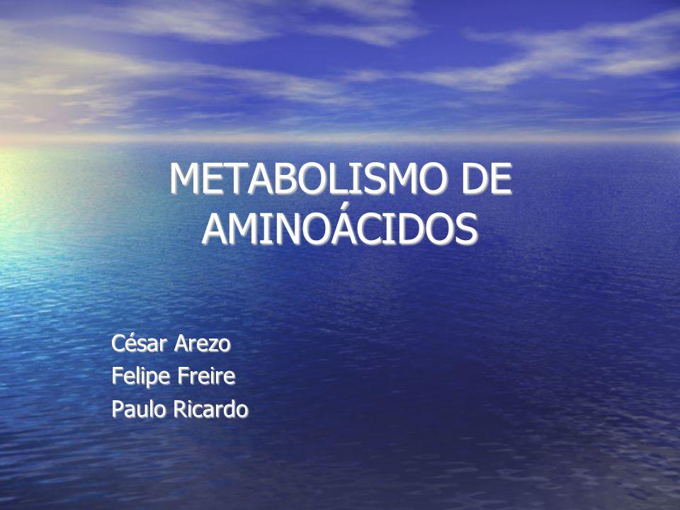 METABOLISMO DE AMINOÁCIDOS César Arezo Felipe Freire Paulo Ricardo