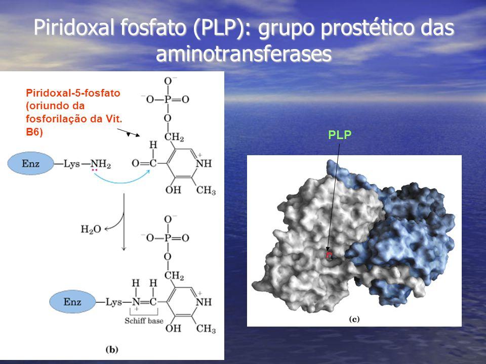 Piridoxal-5-fosfato (oriundo da fosforilação da Vit.