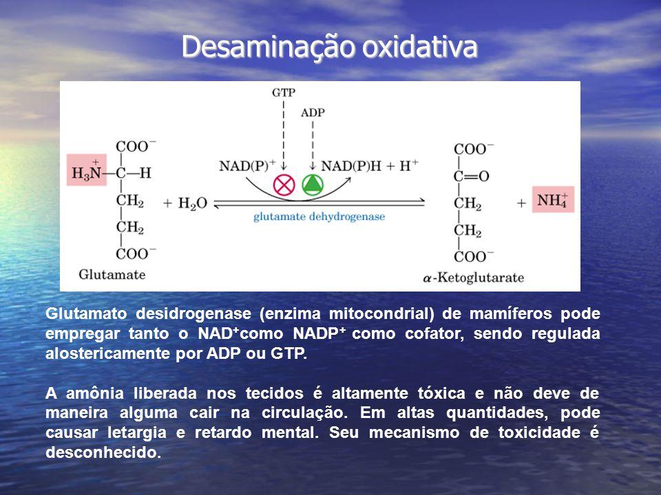 Desaminação oxidativa Glutamato desidrogenase (enzima mitocondrial) de mamíferos pode empregar tanto o NAD + como NADP + como cofator, sendo regulada alostericamente por ADP ou GTP.