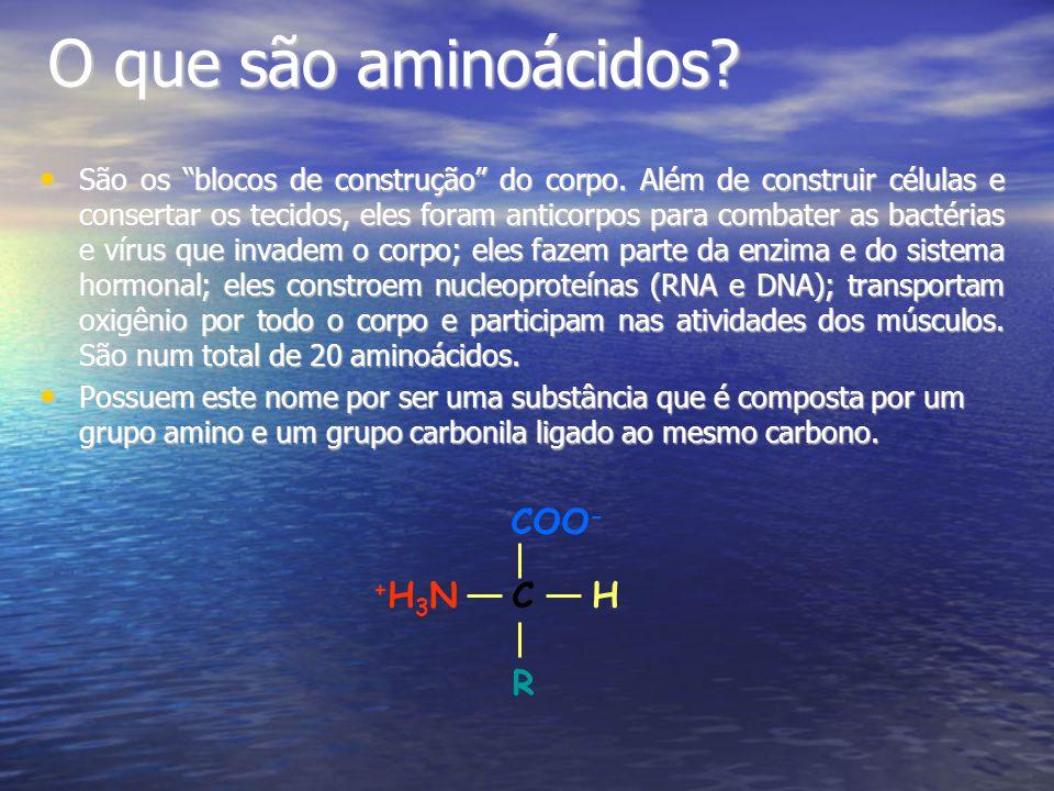O que são aminoácidos.São os blocos de construção do corpo.