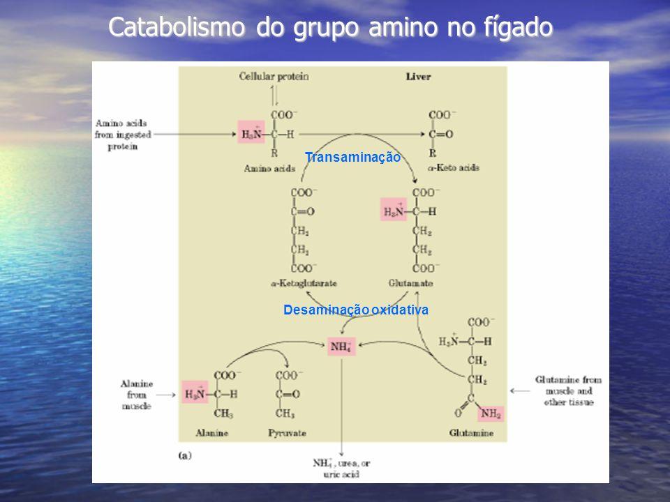 Catabolismo do grupo amino no fígado Desaminação oxidativa Transaminação