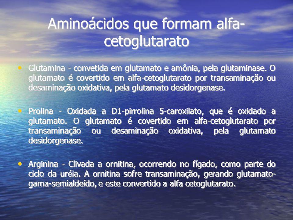 Aminoácidos que formam alfa- cetoglutarato Glutamina - convetida em glutamato e amônia, pela glutaminase.