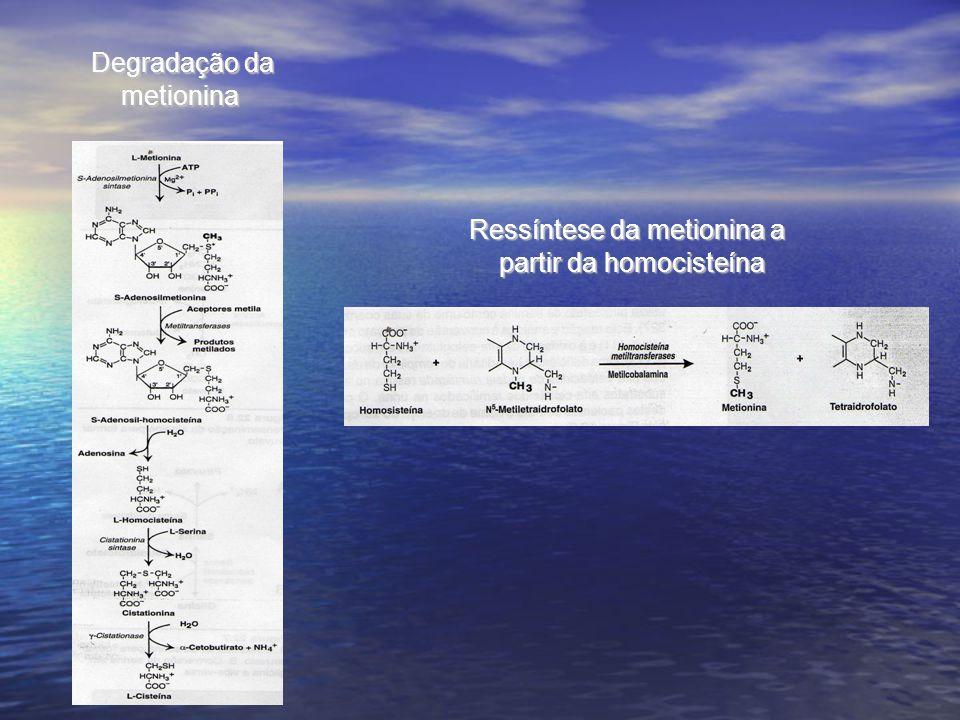 Degradação da metionina Ressíntese da metionina a partir da homocisteína