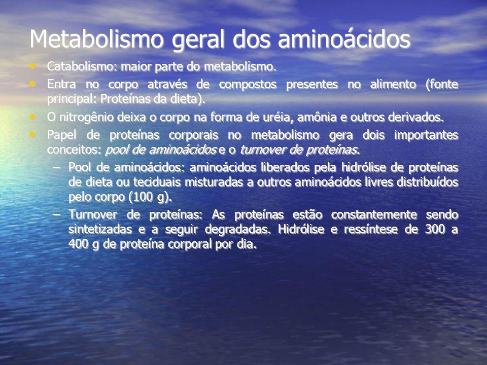 Metabolismo geral dos aminoácidos Catabolismo: maior parte do metabolismo. Catabolismo: maior parte do metabolismo. Entra no corpo através de composto