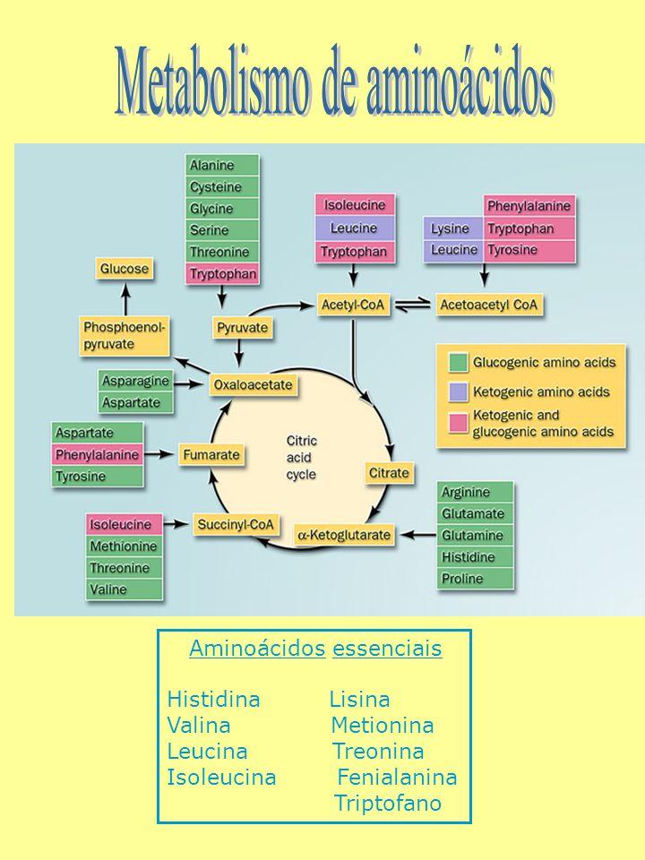 Aminoácidos essenciais Histidina Lisina Valina Metionina Leucina Treonina Isoleucina Fenialanina Triptofano
