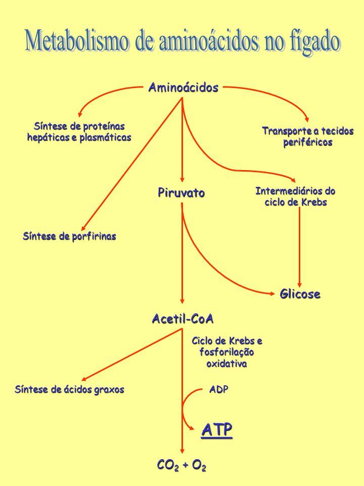 Aminoácidos Síntese de proteínas hepáticas e plasmáticas Transporte a tecidos periféricos Piruvato Intermediários do ciclo de Krebs Glicose Acetil-CoA