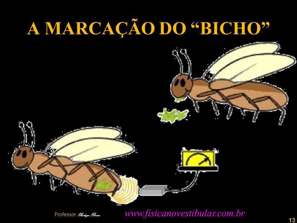 13 A MARCAÇÃO DO BICHO Professor Rodrigo Penna www.fisicanovestibular.com.br