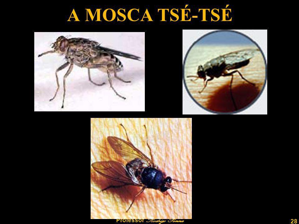 28 Professor Rodrigo Penna A MOSCA TSÉ-TSÉ