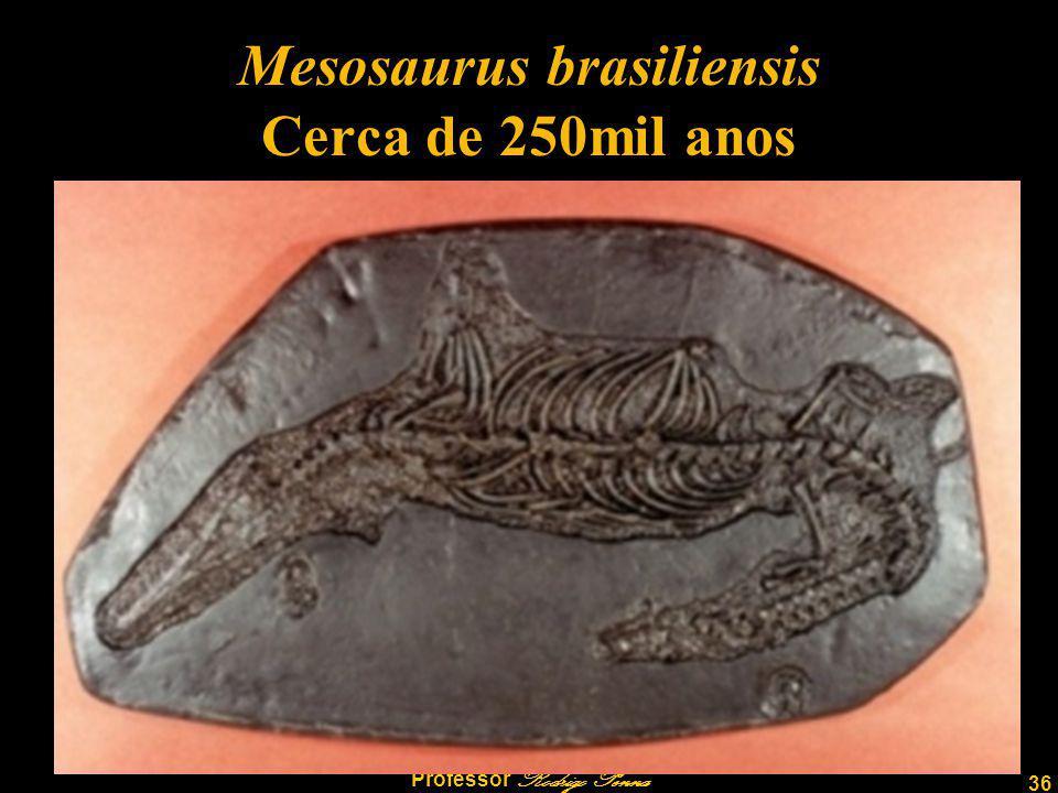 36 Professor Rodrigo Penna Mesosaurus brasiliensis Cerca de 250mil anos