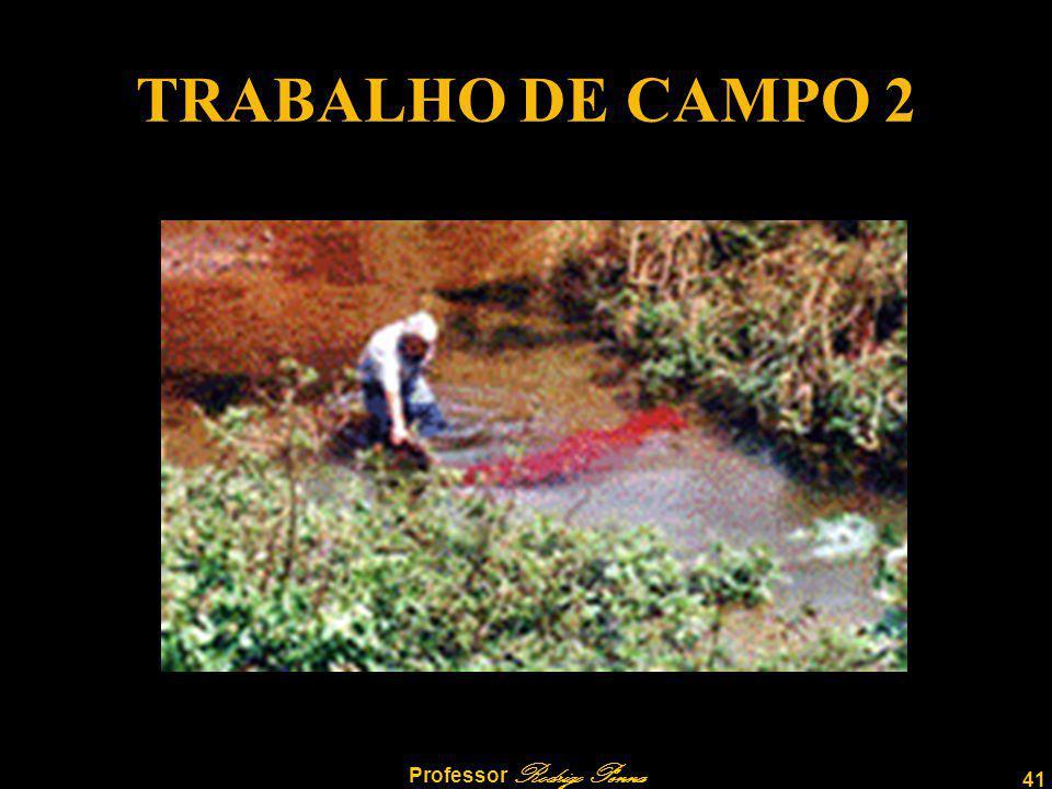 41 Professor Rodrigo Penna TRABALHO DE CAMPO 2