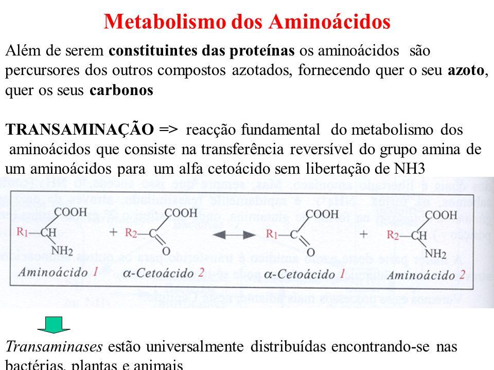 Metabolismo dos Aminoácidos Além de serem constituintes das proteínas os aminoácidos são percursores dos outros compostos azotados, fornecendo quer o